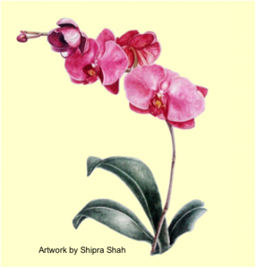 Introduction to Botanical Art – Long Course