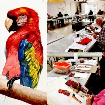 Watercolour class - Lorikeet